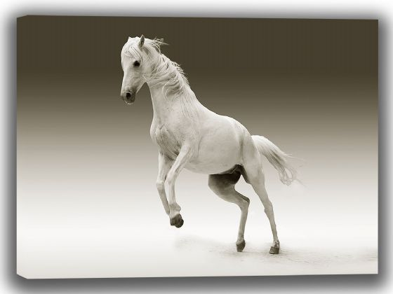 White Horse. Photographic Canvas. Sizes: A4/A3/A2/A1 (3999)